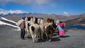 A Photograph Showing Two People Herding Llamas High Up In The Andes Mountains In Bolivia.