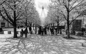 A Black And White Photograph Showing Two Parallel Lines Of Trees And People Walking With The London Eye In The Background, Taken On The South Bank, London.