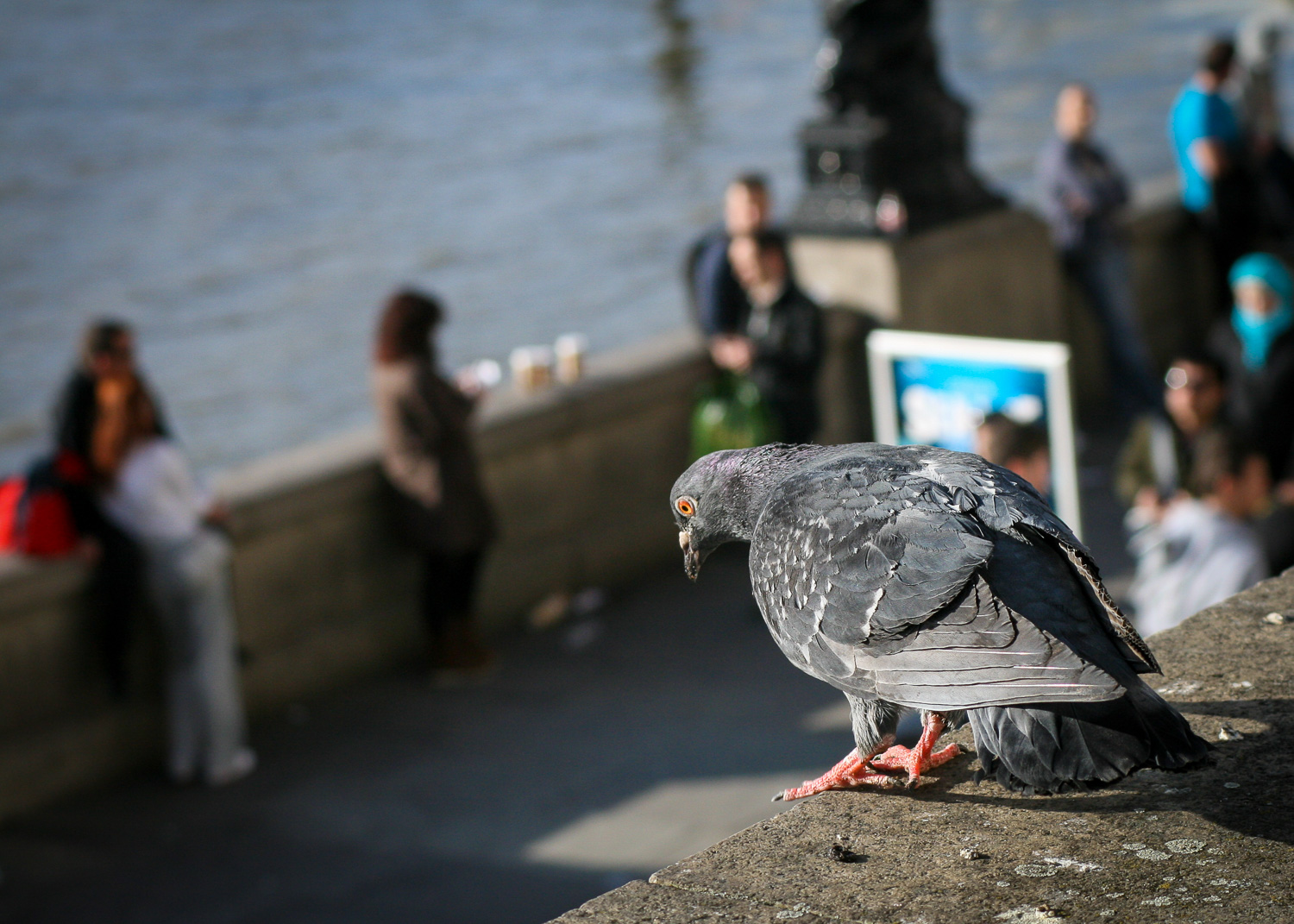 A Photograph Showing A Pigeon Perched Looking Down On Passers-by On The South Bank, London.