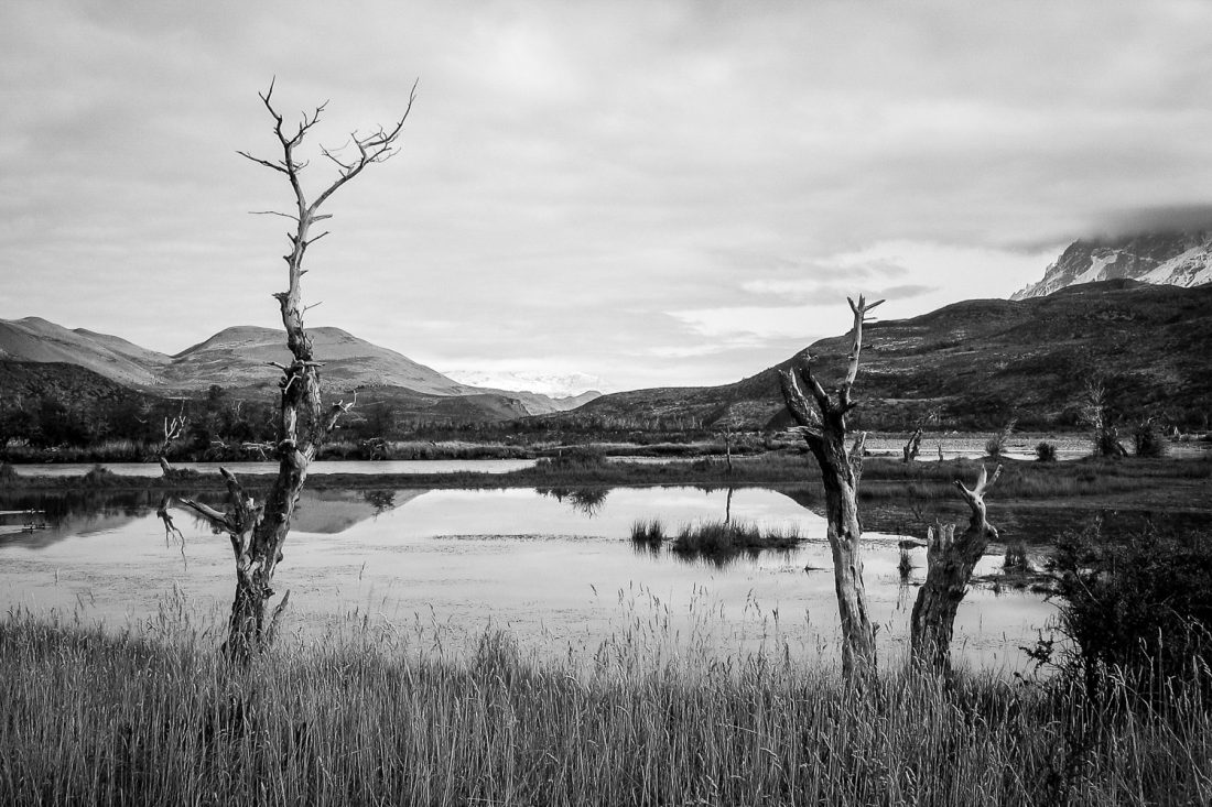 A Black And White Photograph Of A Still Lake With Trees And A Mountainous Backdrop In The Torres Del Paine National Park, Chile.