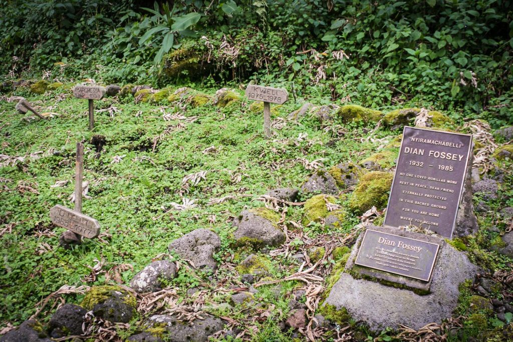 A photograph showing the grave of Dian Fossey and several mountain gorillas in the Volcanoes National Park, Virunga Mountains, Rwanda.
